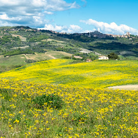 Tuscany by Igor Gruber - Landscapes Prairies, Meadows & Fields