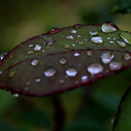 by Sandra Lee - Nature Up Close Natural Waterdrops
