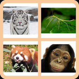 4 Pics 1 Animal