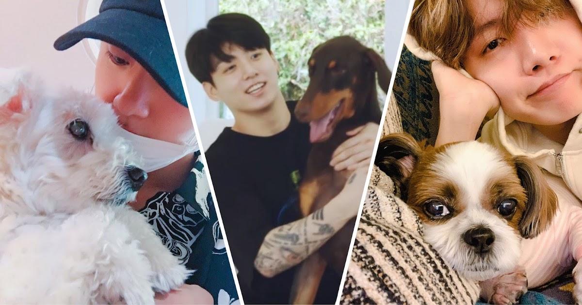 BTS Sangat Mencintai Hewan Hingga Membuat Hati Mereka Patah Saat Tua