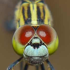 by Bastian M - Animals Insects & Spiders