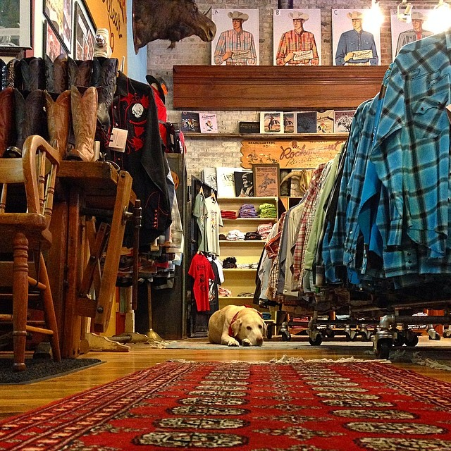 Wazee takes a rest on a rug inside Rockmount Ranch Wear.