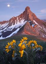 """Photo: Moon, sunflowers, and <a href=""""http://www.widerange.org/search/?q=wetterhorn%20peak"""">Wetterhorn Peak</a>, in the dusk glow in July."""