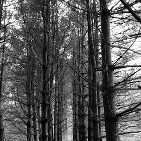Tree Heaven by Virginia Howerton - Black & White Landscapes (  )
