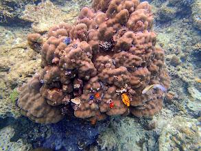 Photo: Christmas Tree Worm Rock, Miniloc Island Resort reef, Palawan, Philippines.