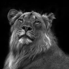 by Nobby Clarke - Black & White Animals