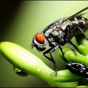 Take a Break by Hanif Mohamad - Animals Insects & Spiders