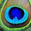 thumb print of god by Siddhartha Chitranshi - Abstract Patterns ( macro, pecock, beauty, feather, closeup )