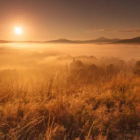 Gold Morning by Karel Stepan - Landscapes Sunsets & Sunrises ( national park, fog, sunset, outdoor, sunrise, view, sun, misty )