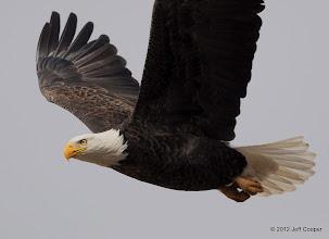 Photo: Bald Eagle Lindon Marina Lindon, Utah