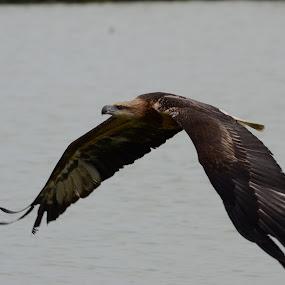 Explorer by Boedi Setiawan - Animals Birds