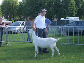 Photo: Klasse 5: eenjarige witte geit. 1a. Karen MP1.