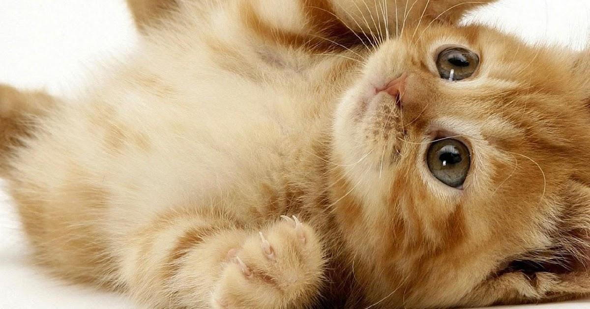 Gambar Kucing Edit godean.web.id