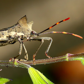 The Wilter by René Wright - Animals Insects & Spiders ( macro, stinky, plants, insect, wilter )