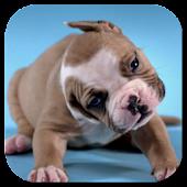 Cute Puppies Video Wallpaper