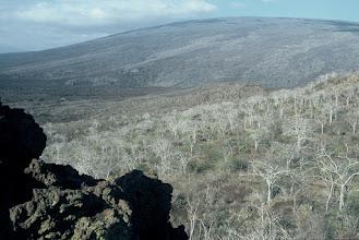 Photo: Isabela highland, Galapagos.