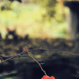 by Mizani Photo - Nature Up Close Leaves & Grasses (  )