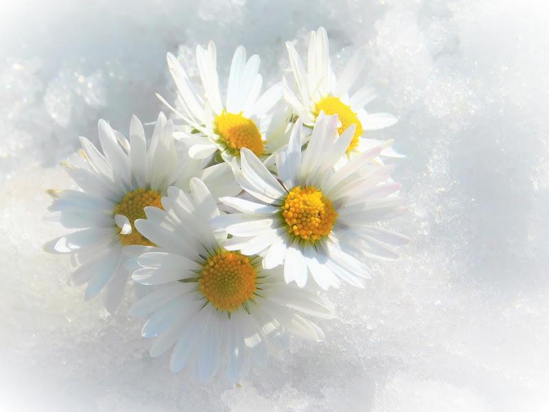 Inverno e primavera di RITA_CARLUCCI