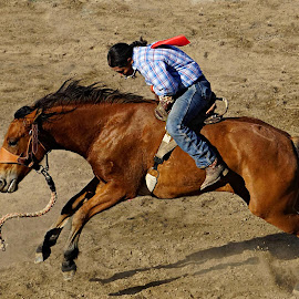 Rider  by Gaylord Mink - Sports & Fitness Rodeo/Bull Riding ( sports, rodeo, wild horse, rider )