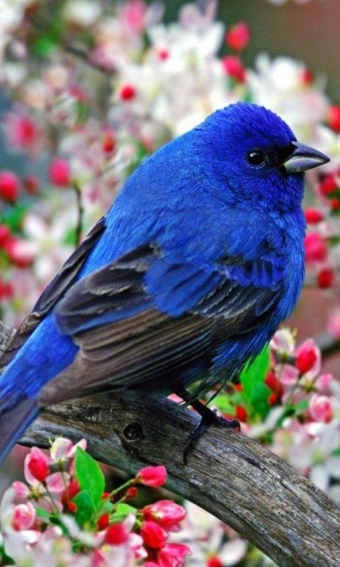 Bird Wallpapers HD Android Apps on Google Play