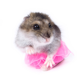 Funny Hamsters Jigsaw Puzzles