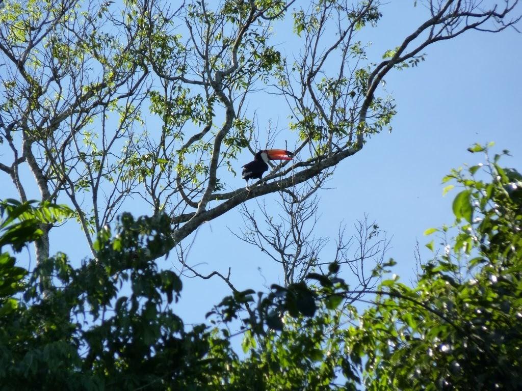 Safari por la Selva del Parque Nacional Iguazu