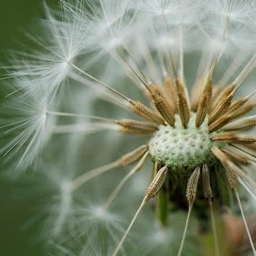 soft by Baka No Hito - Nature Up Close Flowers - 2011-2013
