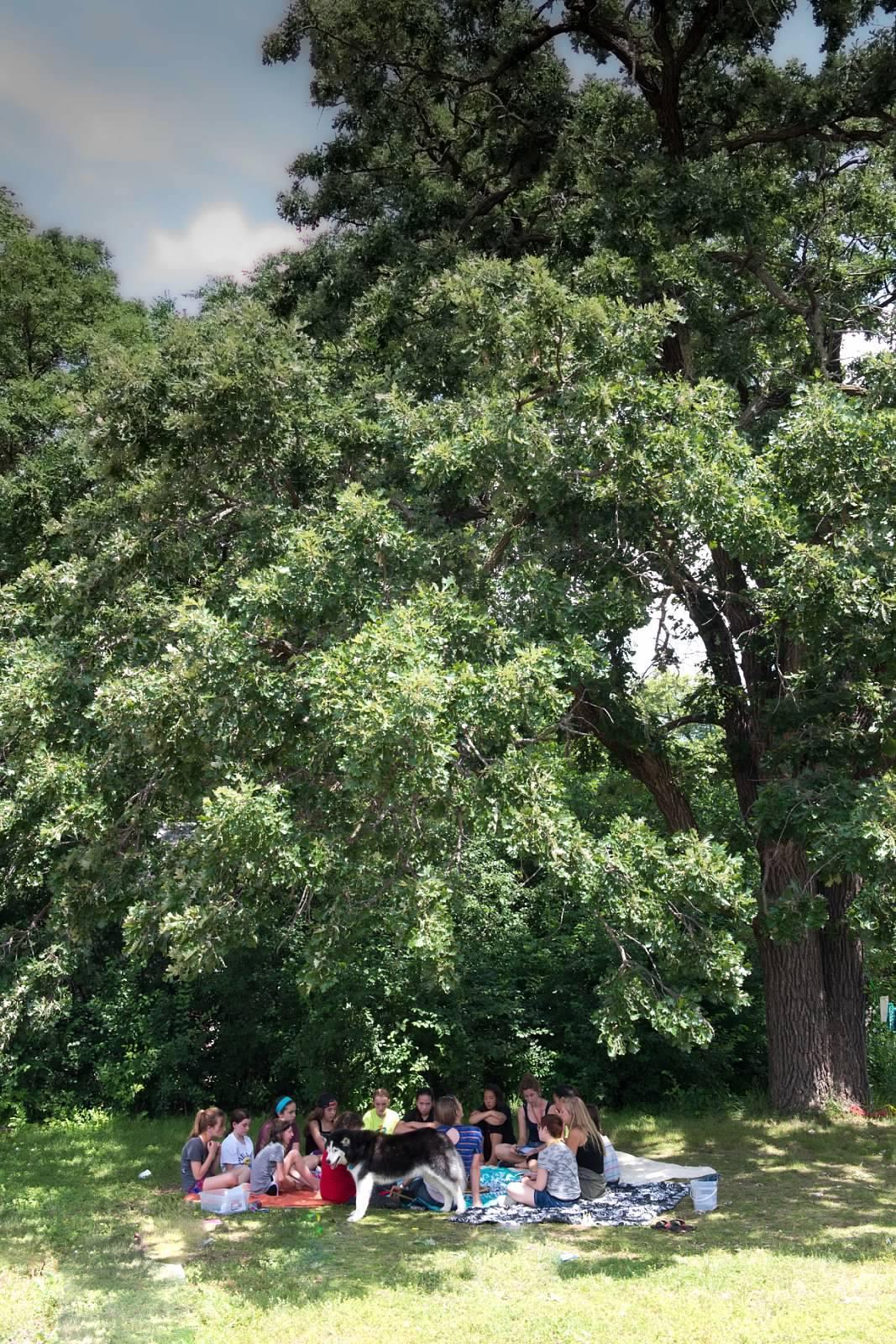 tree horizontal.jpg