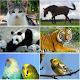 Animal sounds (app)
