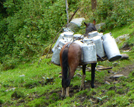 Photo: Horse loaded with empty milk cans.  Farmers milk the cows by hand in the field where they are.