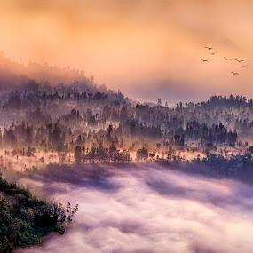 Foggy Morning by Tien Sang Kok - Landscapes Mountains & Hills ( foggy, mountain, nature, mount bromo, landscape )