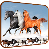 Horse Racing Pro