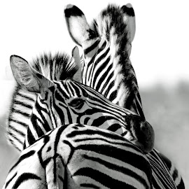 I have your back, mom by Claudia Lothering - Black & White Animals