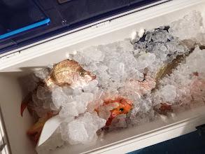 Photo: 本日の釣果です。 アカイサキは皆さんよく釣れました。