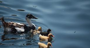 El agua permite la vida de un gran número de especiales animales y es sinónimo de un medio ambiente sano.