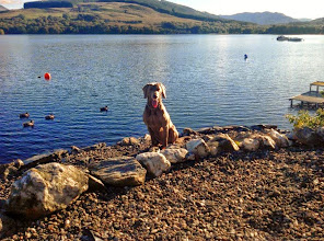 Photo: Pet friendly cottage Scotland? June late availablity at Little Briar Cottage, Loch Earn, Sleeps 2-4 www.stayatbriar.co.uk  (1-2 dogs) #ukphotography   #petfriendly   #doglovers