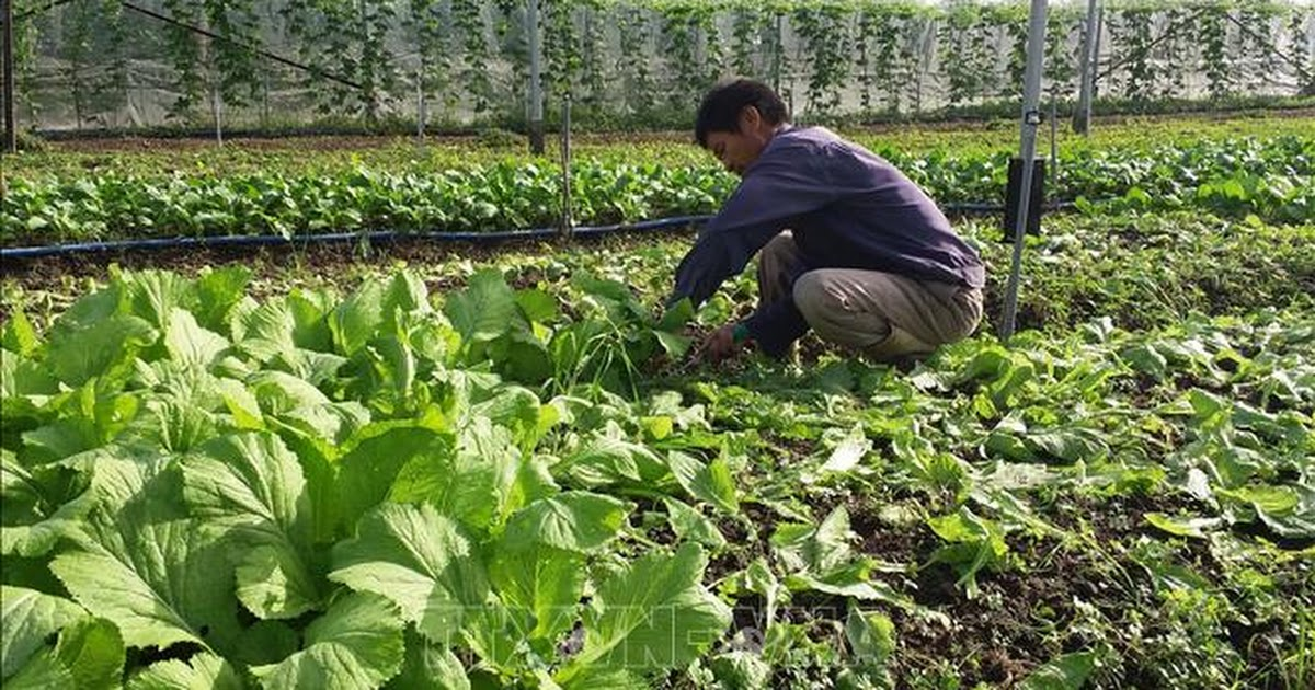 Áp dụng bộ tiêu chuẩn thúc đẩy phát triển sản phẩm nông nghiệp hữu cơ