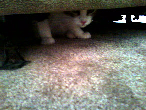 Photo: The first day he was here, Catface Meowmers had to check the whole place out, for Safety.