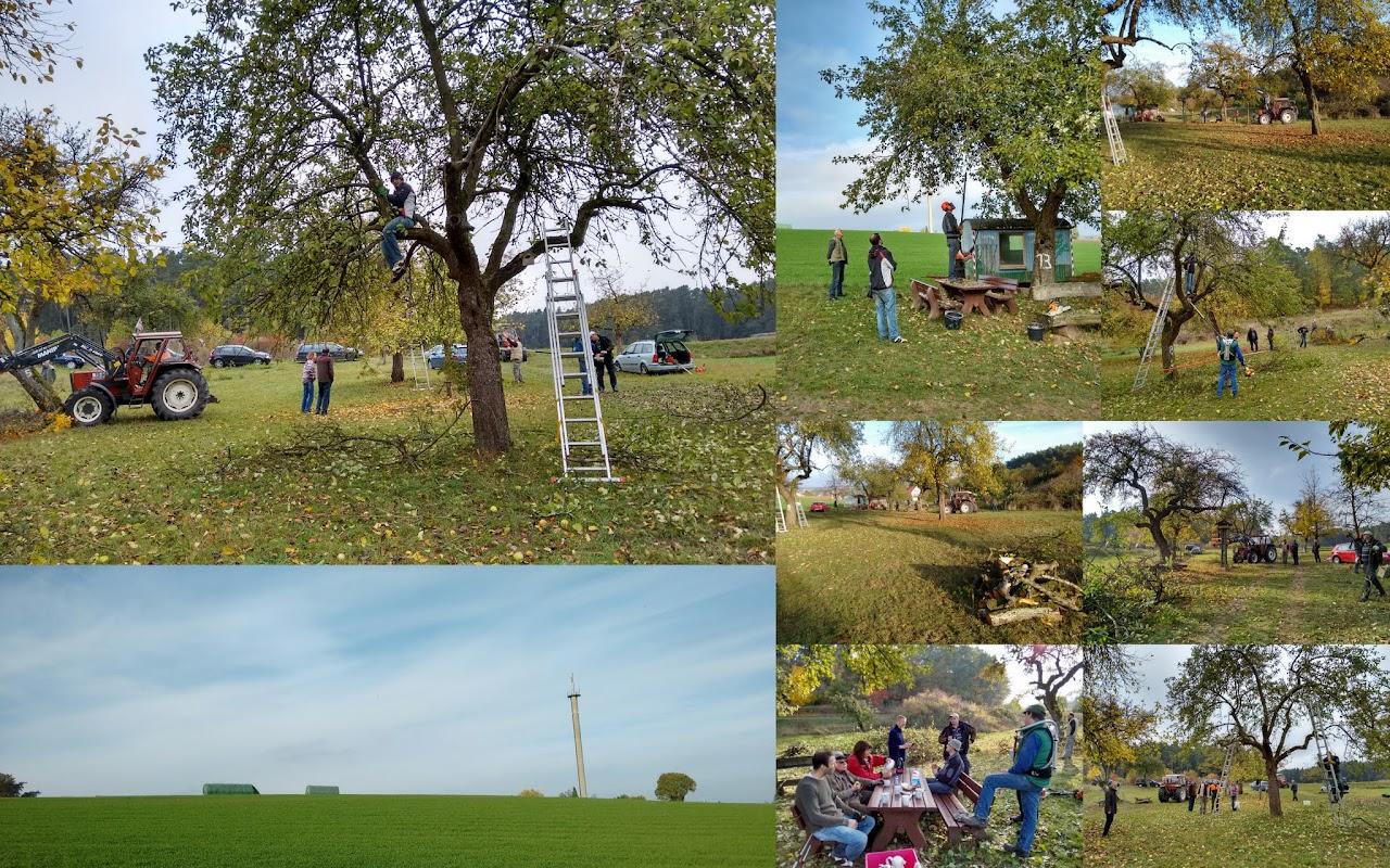 Obstbaumschnitt auf der Streuobstwiese am 24.10.2015