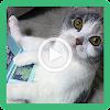 Videos de Gatos Graciosos y Risa APK