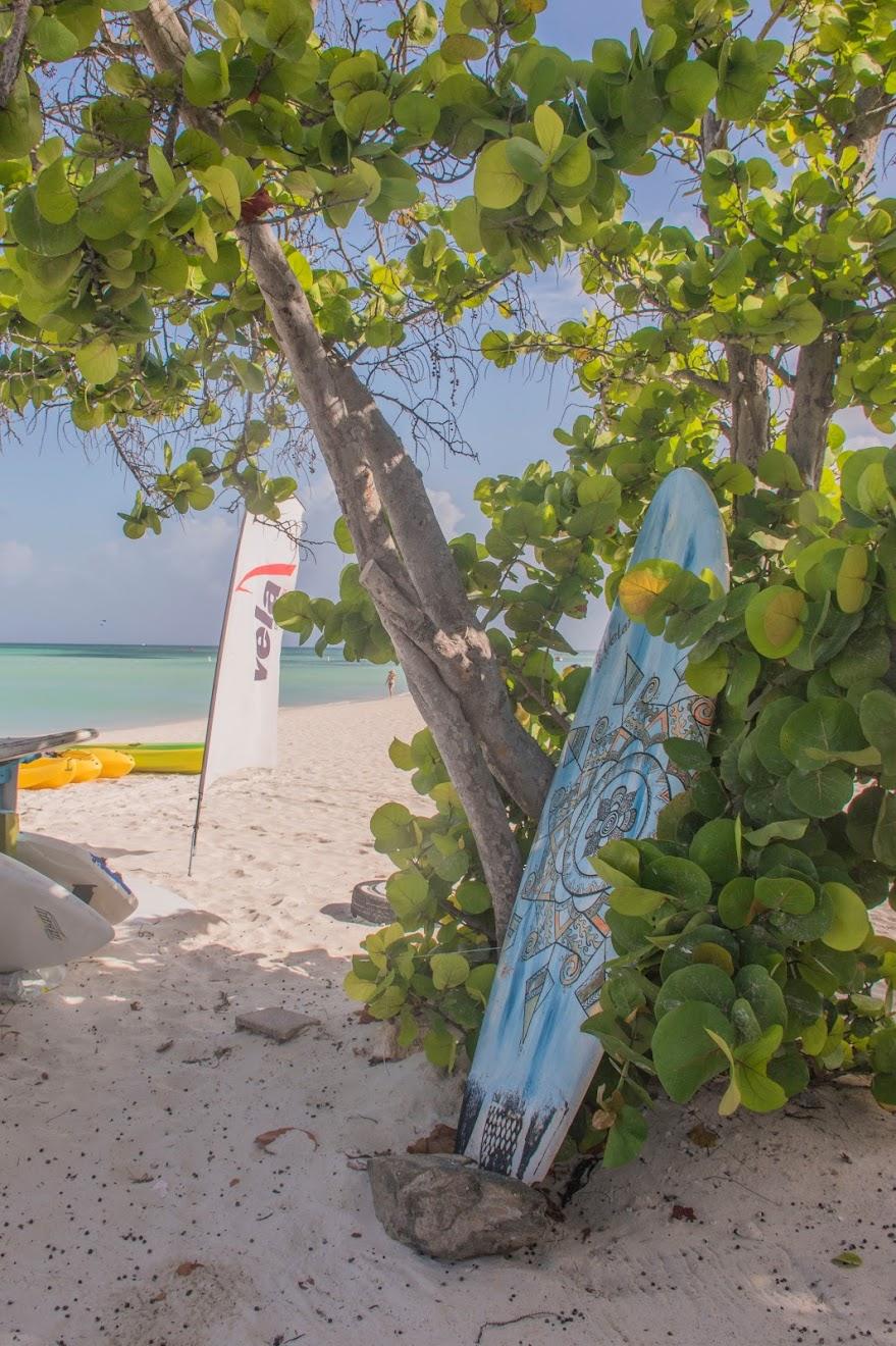 surfen-aruba