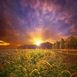 Love Is Knowing We Shall Be Free by Phil Koch - Landscapes Sunsets & Sunrises ( trending, country, shadow, rural, office, scenic, hope, canon, beautiful, pastel, weather, season, sky, natural, inspired, heaven, uni  ty, field, light, peace, shadows, dawn, photography, love, sunrise, vertical, endless, clouds, fineart, sun, colors, joy, lines, popular, arts, meadow, wisconsin, art, living, nature, mo  rning, inspirational, dramatic, e  arth, portrait, horizons, horizon, environment, sunlight, outdoors, sunset, earth, serene, landscape,  )