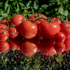 Reflective Tomatoes by Jim Downey - Food & Drink Fruits & Vegetables ( water, tomato, fresh, cluster, harvest, reflective, off the vine, droplets )