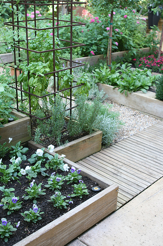 home kitchen garden