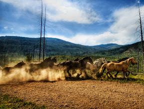 Photo: Stampede of the Wild Horses - Yellowstone  After a long hike through the mountains of Yellowstone, I came across over 40 horses sprinting from one meadow to the next. I stepped behind a tree to get out of the way and shot this one.  from the blog at www.stuckincustoms.com