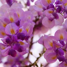 Purple Power by Brenda Shoemake - Flowers Tree Blossoms
