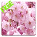 Free Sakura HD Live Wallpaper icon