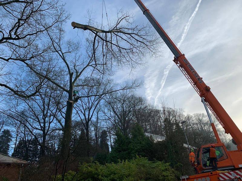 Vellen en demonteren van bomen