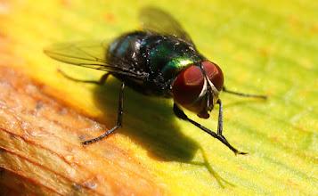 Photo: mosca en una flor (foto del 2 de mayo de 2014)