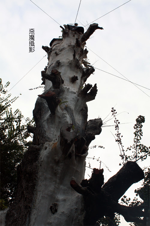 china_green_03